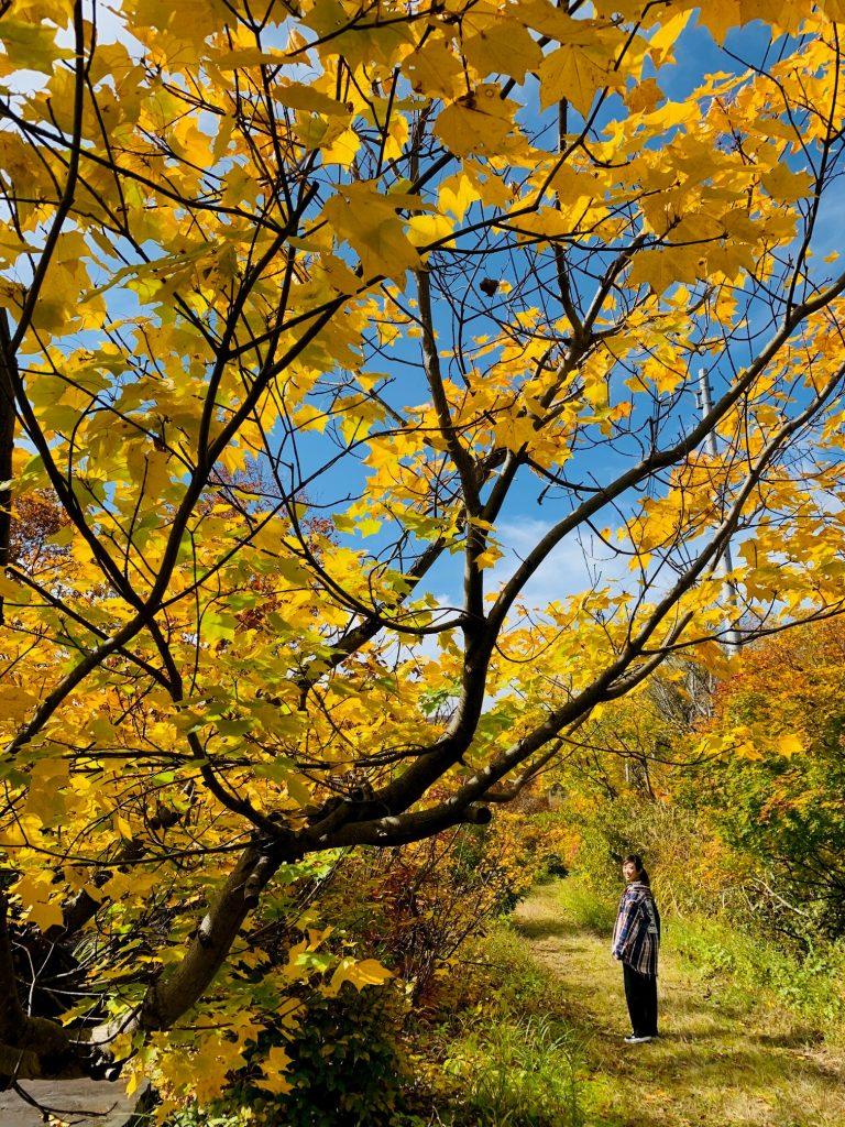 銀山平は色鮮やかな紅葉!